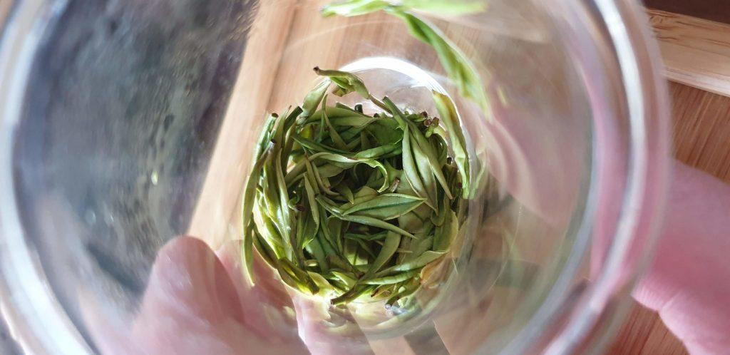 Świeże liście herbaty wszklanym zaparzaczu - flute brewer